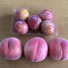 桃/フルーツ 桃尻とかw  桃のカプレーゼの季節も終わ…