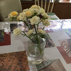 住まい 一本にいっぱいのバラが咲きました (1枚目)