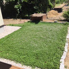 成長記録/グランドカバー/クラピア/ガーデニング/庭づくり 庭関係連投です。  我が家はクラピアのグ…