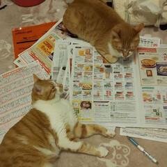 カワイイ/ペット/ペット仲間募集/猫/にゃんこ同好会/うちの子ベストショット 生協~、にゃんこ達も一緒に選んでくれてま…