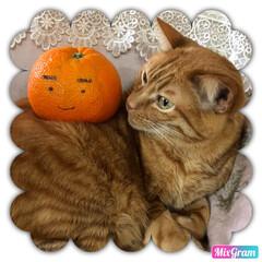 ネコ好き/羊毛フェルト/羊毛フェルト猫/猫大好き/茶トラ/cat/... 穏やかな ポテト君 こんな事されても、、…