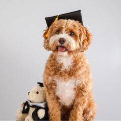 卒業/犬/HERO🐶くん  今年6月に娘が大学を卒業❣️👏🏻( ˊ…(2枚目)