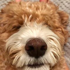 おやすみ🌙/HERO🐶くん/ペット/犬   『あなたはだんだん眠くなぁ〜るぅ〜』…(4枚目)