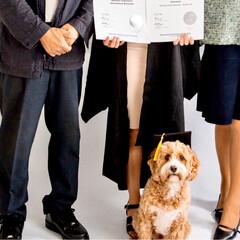 卒業/犬/HERO🐶くん  今年6月に娘が大学を卒業❣️👏🏻( ˊ…(4枚目)