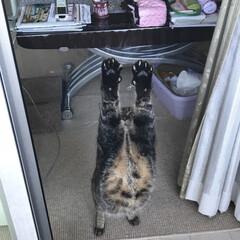 猫のいる生活 ベランダにて撮影。 振り返るとストレッチ…