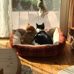 ネコ好き/猫屋敷