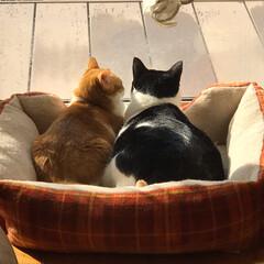 ネコ好き/猫屋敷 (2枚目)