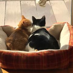 ネコ好き/猫屋敷 (3枚目)