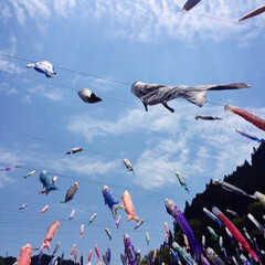 子供の日/鯉のぼり/熊本/春のフォト投稿キャンペーン/GW/おでかけ/... 去年GWに行った熊本の鯉のぼりの風景
