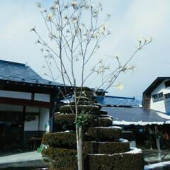 ハンドメイド/ものづくり/小正月/風景 冬の思い出  厳寒の小正月、山間部の家の…