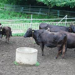 牛肉/田舎暮らし/物流 ヘルシー志向の都会で愛される短角牛 、田…