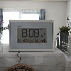 ヒヨドリ/ハクチョウ/田舎暮らし/オナガ 最高気温 22℃ 最低気温 11℃ 今朝…(1枚目)