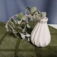 多肉植物/カランコエ/白銀の舞 訪問先で頂いた植物。 おそらく「カランコ…