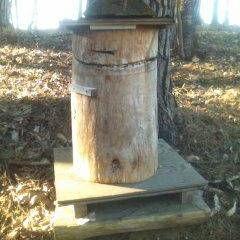 ハチミツ/ミツバチ/リサイクル/住まい 鎮守の森に養蜂の巣箱あり。ニホンミツバチ…