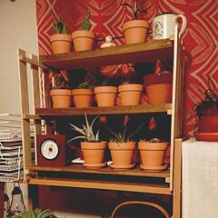 多肉植物/サボテン/日光浴/日曜大工/耐震問題/すのこ 植物の日光浴用にすのこと板とアイアンウォ…