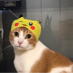 ピカチュウ/被り物/ペット/猫 やっとピカチュウGETだぜ❗️❗️❗️