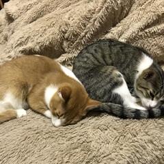 寝相/仲良し/ペット やっぱり同じ寝かただねぇ💕