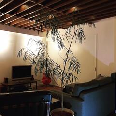 観葉植物のある暮らし/天井/照明デザイン/間接照明/ミッドセンチュリー/リノベーション/... 大人のインテリア