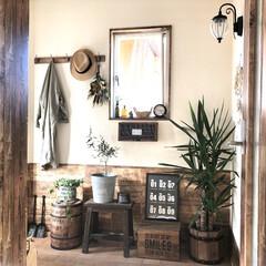 NO GREEN NO LIFE/アイビー/オリーブの木/ユッカ/コーヒー樽/ハンガーフックDIY/... 玄関の模様替え♬