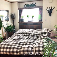 癒し空間/寝室/観葉植物/グリーン 寝室にたくさんのグリーンを置いて癒し空間…
