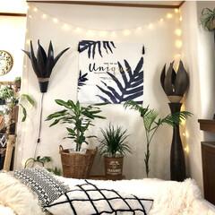 観葉植物のある暮らし/NO GREEN NO LIFE/海外インテリアに憧れる/寝室/至福のひととき 寝室改造中♬