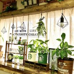 ステンシル/観葉植物/カーテンボックス/リビング/ボタニカル/DIY/... カーテンボックスを作りました♬