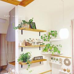 観葉植物のある暮らし/壁面ディスプレイ/壁面インテリア/カフェ風インテリア/インテリア雑貨/ナチュラルインテリア/... キッチンカウンター横⋆°。✩ 棚を設置し…