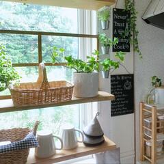 アイビー/LIMIAな暮らし/窓枠風/DIY/簡単DIY/LIMIADIY同好会/... おはようございます☀︎ kitchen窓…(1枚目)