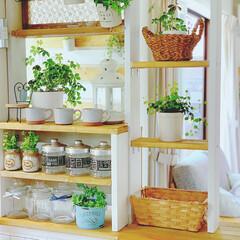 キッチンカウンターDIY/DIY女子部/キッチンカウンター/キッチンインテリア/令和の一枚/フォロー大歓迎/... キッチンの内側からの眺め⋆°。✩ グリー…