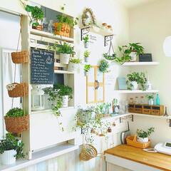 観葉植物/フェイクグリーン/カウンター上/インテリア/DIY/雑貨/... * 変わらぬ風景(*^^*) * カウン…