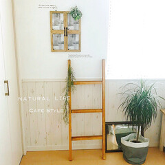 窓枠風/観葉植物/ラダーdiy/ラダー/DIY/雑貨/... * 寝室の一角 *