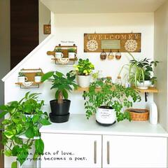 観葉植物/グリーン/DIY/雑貨/100均/セリア/... * 我が家の玄関 * Welcome!!…