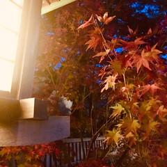 ライトアップ/紅葉/水鏡/ドライブ/おでかけ 金沢の東茶屋街〜兼六園へ 大好きなお店で…