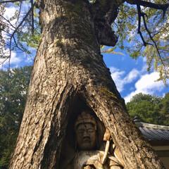 ドライブ/秋/おでかけ ①②は樹齢450年の銀杏の大木に彫られた…