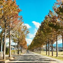 ドライブ ドライブには最高の秋晴れ☀️ 帰り道でた…
