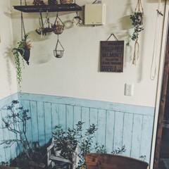 ダイソー/リメイクシート/非難/台風/グリーン/植物/... 台風に備えて、ベランダのグリーンたちを避…(1枚目)