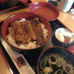外食/うなぎ/鰻の蒲焼き/おでかけ/旅行/フード 息子の遠征で静岡まで応援に! 静岡といえ…