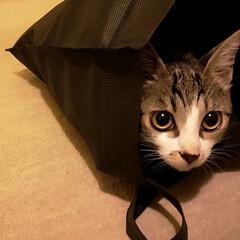 ネコ/ねこ/ジョジョ イギーと仲良しジョジョちゃん。 やれやれ…(2枚目)
