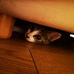 猫好き/猫と暮らす/ねこちゃん/ネコ うちのねこちゃんは狭い所に入りたがります…