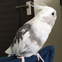 ゆめかわ/ユニコーン/ふわもこ fluffy/鳥/オカメインコ/インコ/... 最近のヘアスタイルはこんな感じ。  ユニ…