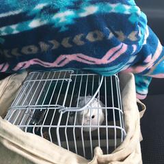 オカメインコ/鳥/インコ/オカメインコのコナン/ペット ❶病院に向かう途中の車の中。 歌ってご機…