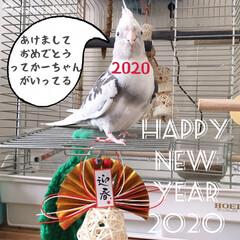 小鳥/モフモフ/正月/今年もよろしく/インコ/オカメインコ/... あけましておめでとうございます。  本年…