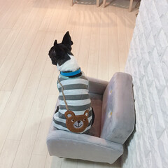 ダイソークッションレンガシート/ペット/犬/ファッション/おでかけ/おうちごはん 八叶🐶八愛叶🐶の服を買いましたぁ〜❣️ …(2枚目)