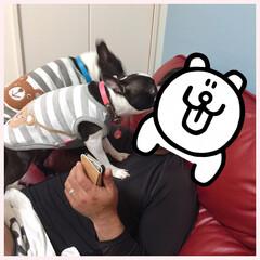 ダイソークッションレンガシート/ペット/犬/ファッション/おでかけ/おうちごはん 八叶🐶八愛叶🐶の服を買いましたぁ〜❣️ …(5枚目)