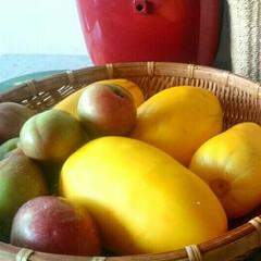 プラム/まくわ瓜/旬の果物/家庭菜園 ご近所さんから頂いた果物 暑くて食欲がな…