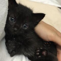 子猫/黒猫 くろねこ