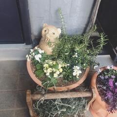 玄関/賃貸/フォロー大歓迎 玄関のお花達🌿 このたぬきさんは我が家の…