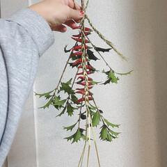 節分/節分飾り 節分用玄関飾り 今年はひいらぎに藁で編ん…