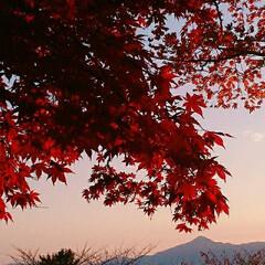 赤/綺麗/紅葉/秋 🏵🍁🍂  去年の秋🍄 今年も綺麗な絵が撮…
