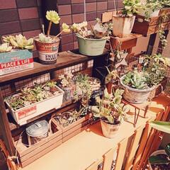 リメイク鉢/リメイク缶/観葉植物/賃貸/多肉植物の居場所/多肉植物/... ベランダ室外機カバーの上 多肉ちゃん増え…